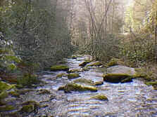 State Stocked Trout Stream at Log Cabin Vacation Rental near Boone, NC, and Blowing Rock, NC