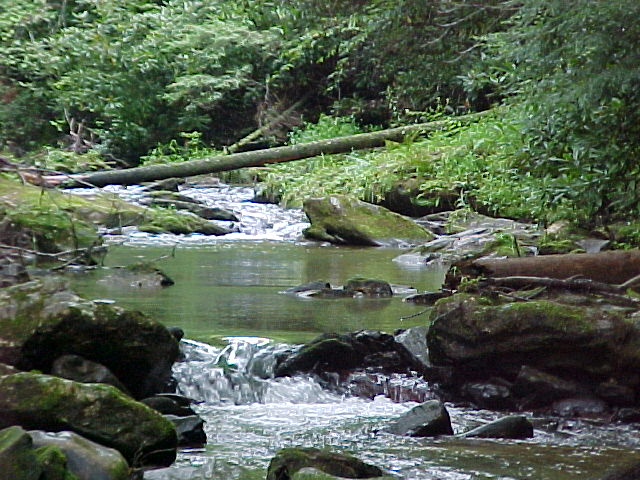 State Stocked Trout Stream at Log Cabin Vacation Rentals near Boone, NC, and Blowing Rock, NC