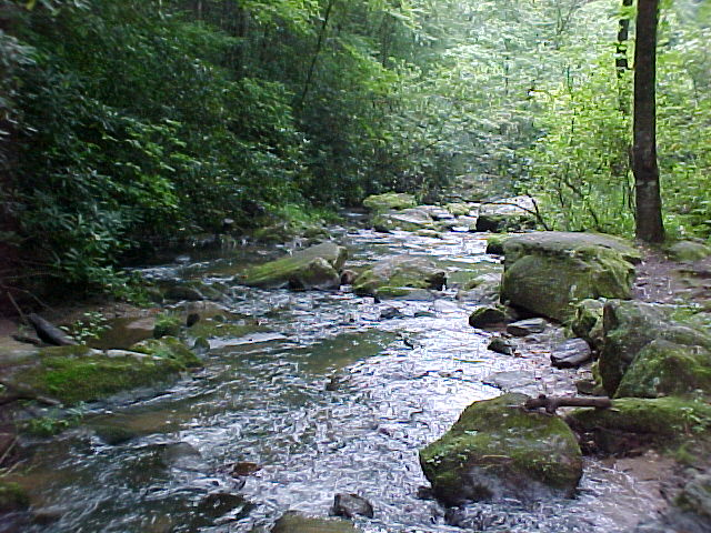 Fall Creek State Stocked Trout Stream At Fall Creek Cabins